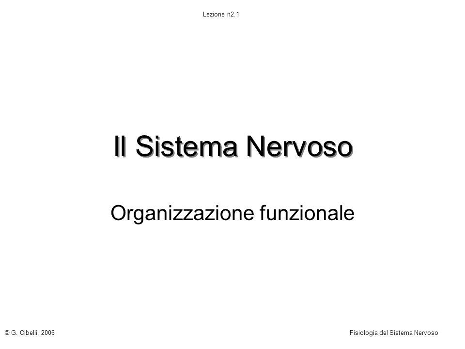 Il Sistema Nervoso Organizzazione funzionale © G. Cibelli, 2006Fisiologia del Sistema Nervoso Lezione n2.1