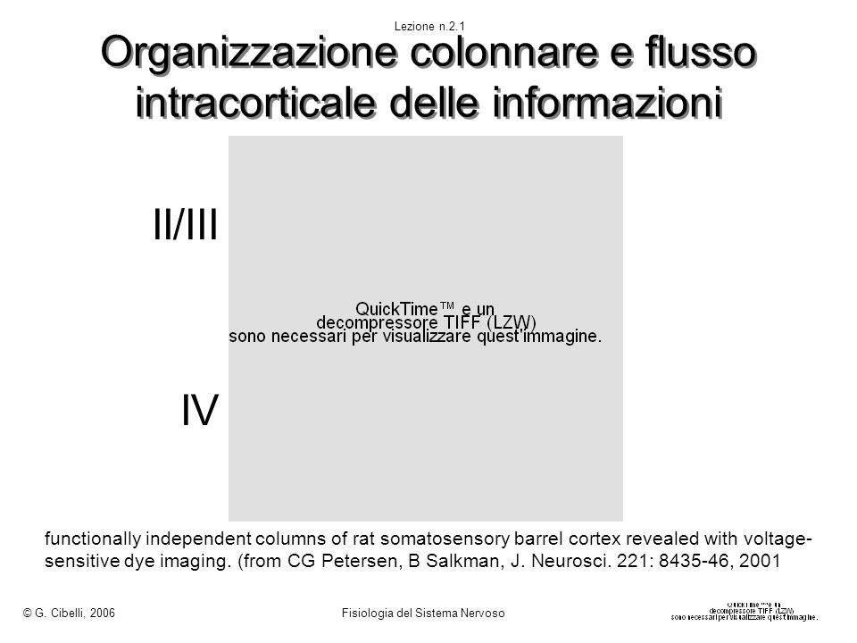 Organizzazione colonnare e flusso intracorticale delle informazioni II/III IV © G. Cibelli, 2006 Fisiologia del Sistema Nervoso Lezione n.2.1 function