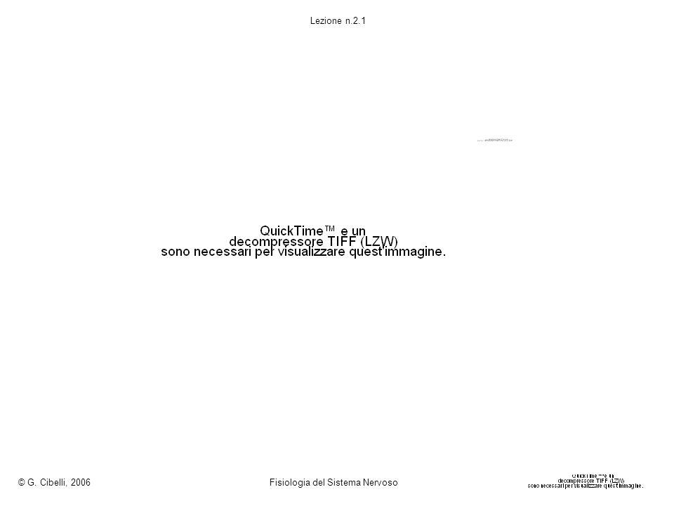 © G. Cibelli, 2006 Fisiologia del Sistema Nervoso Lezione n.2.1