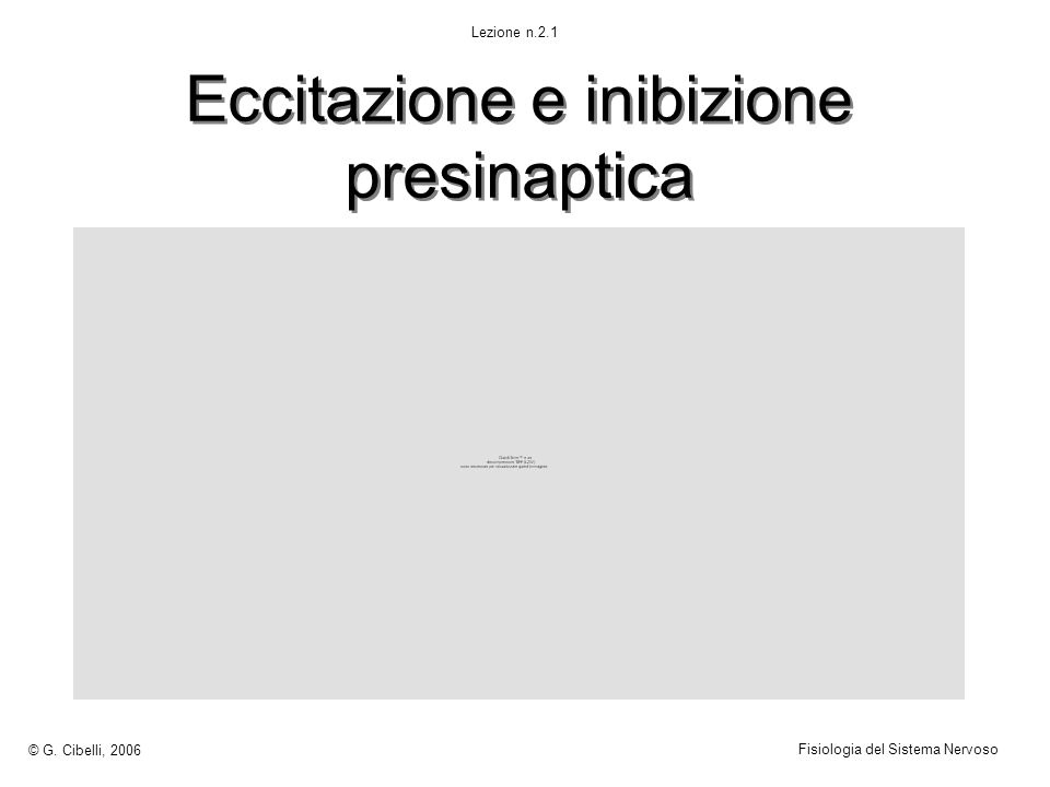 Eccitazione e inibizione presinaptica © G. Cibelli, 2006 Fisiologia del Sistema Nervoso Lezione n.2.1