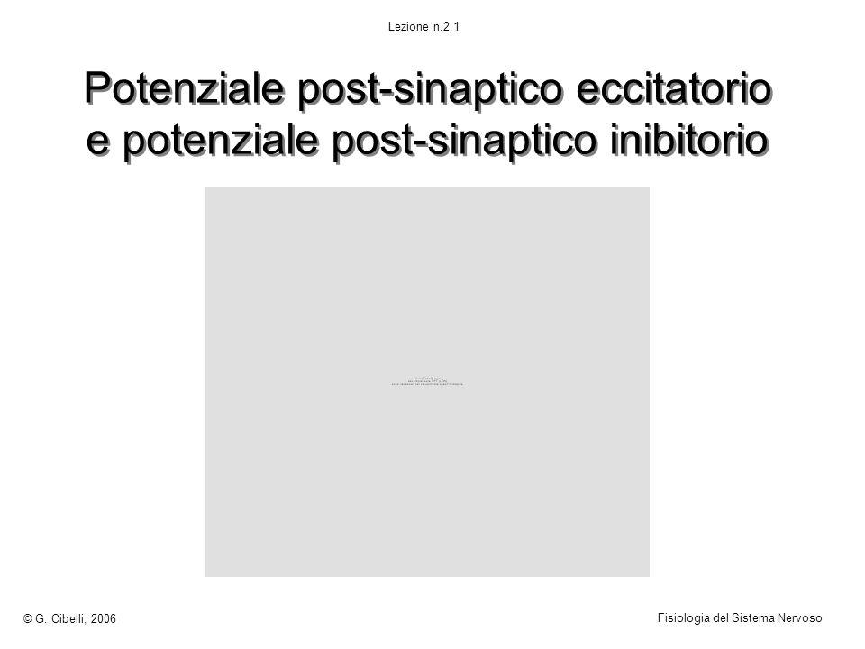 Potenziale post-sinaptico eccitatorio e potenziale post-sinaptico inibitorio © G. Cibelli, 2006 Fisiologia del Sistema Nervoso Lezione n.2.1