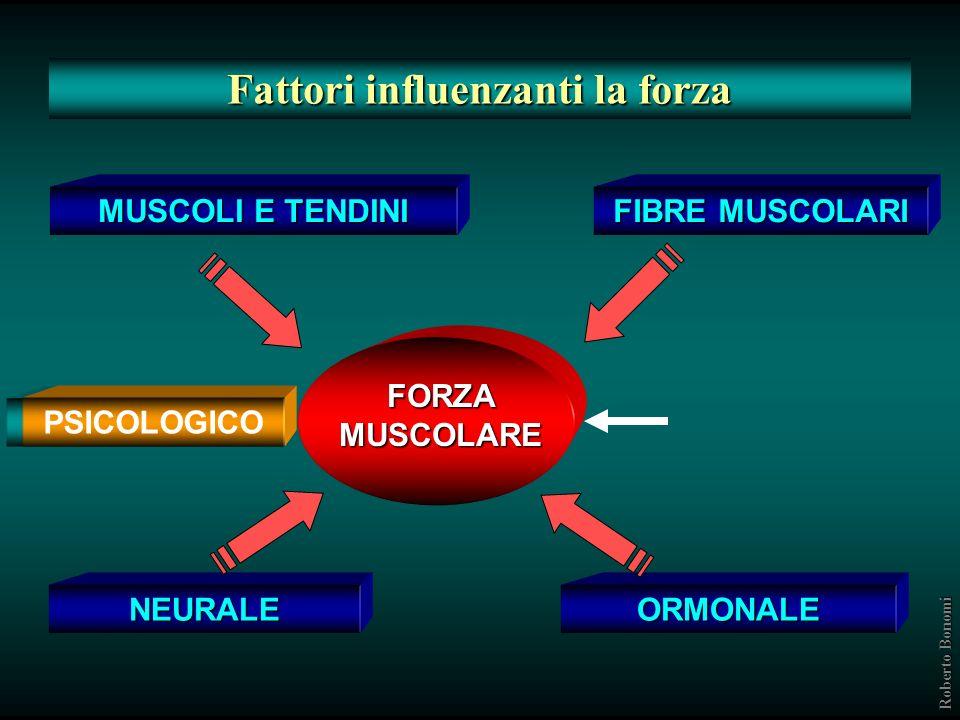 Fattori geneticamente determinati Lunghezza e sezione trasversa delle fibre Lunghezza dei sarcomeri Lunghezza e sezione trasversa delle proteine contr