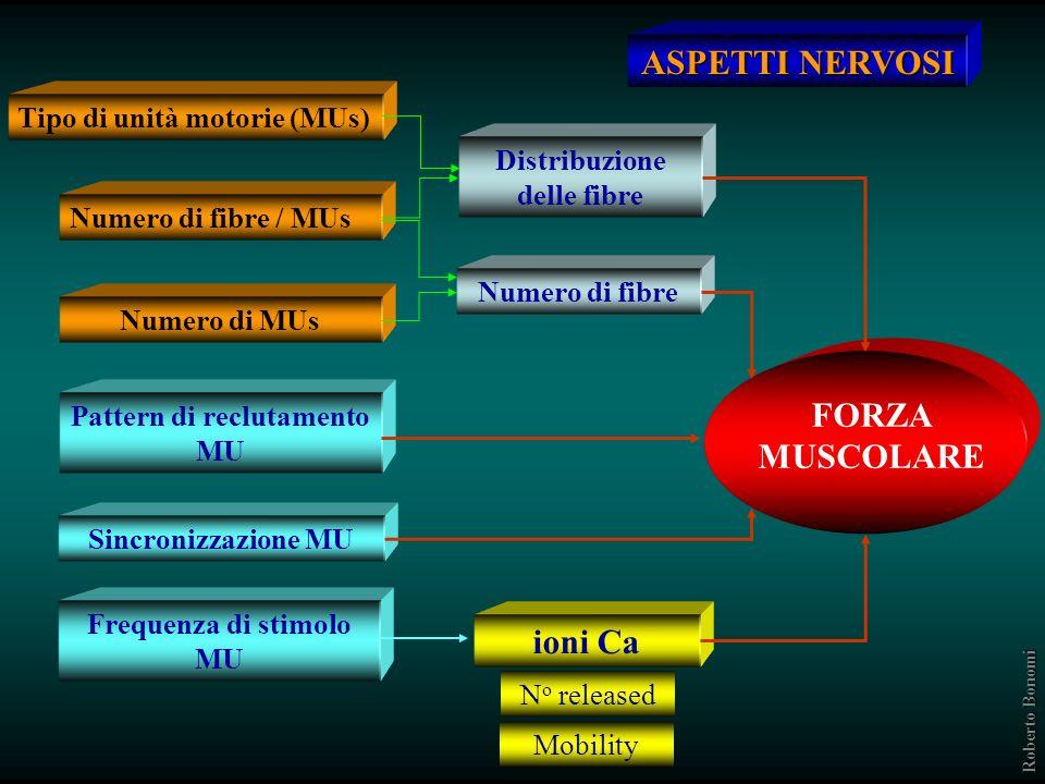 FORZA MUSCOLARE ASPETTI STRUTTURALI Lunghezza fibre Sezione trasversa fibre Distribuzione fibre metabolismo Attività enzimatica contenuto CP, ATP ioni