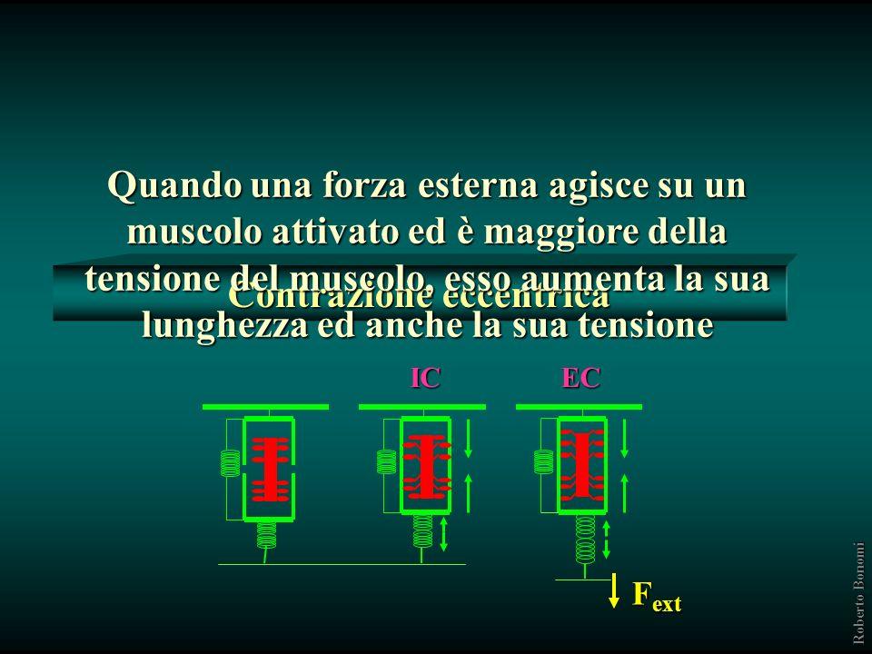 Stretchking passivo 8000 nuovi sarcomeri/ora Caiozo et al. 2003; Goldspink 2002 Roberto Bonomi Per quanto riguarda laumento della massa, è stato dimos