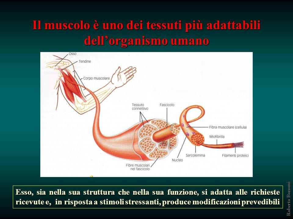 Il muscolo è uno dei tessuti più adattabili dellorganismo umano Esso, sia nella sua struttura che nella sua funzione, si adatta alle richieste ricevute e, in risposta a stimoli stressanti, produce modificazioni prevedibili Roberto Bonomi