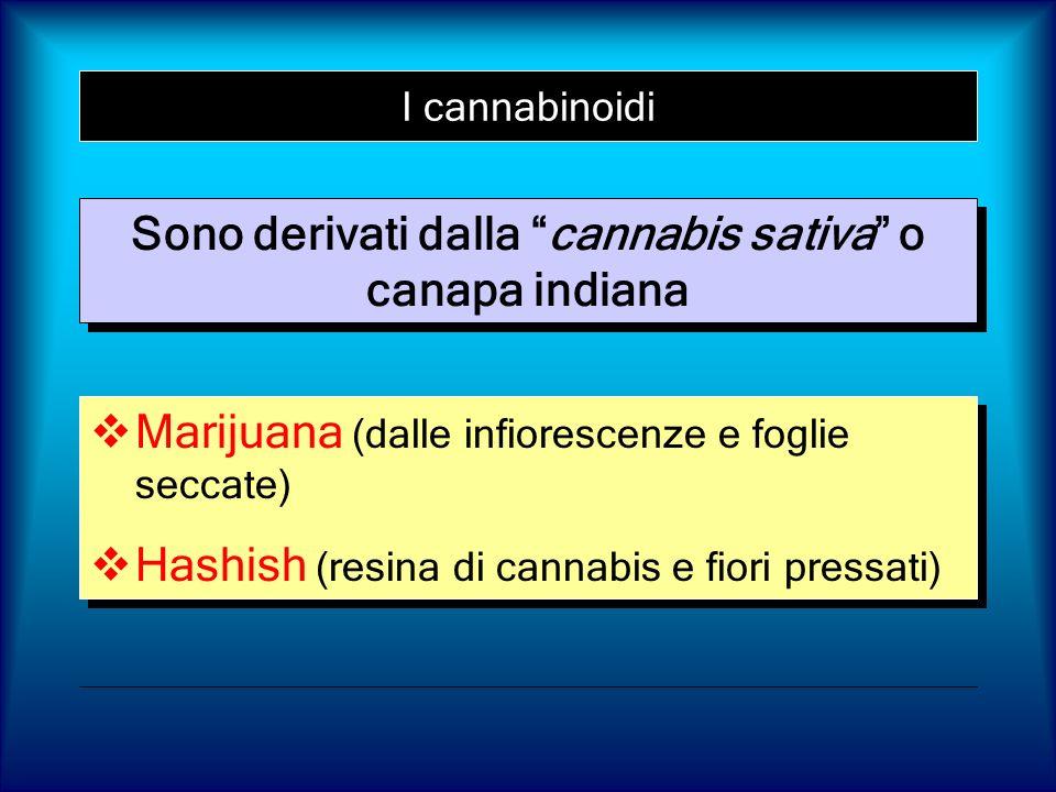 I cannabinoidi Marijuana (dalle infiorescenze e foglie seccate) Hashish (resina di cannabis e fiori pressati) Marijuana (dalle infiorescenze e foglie