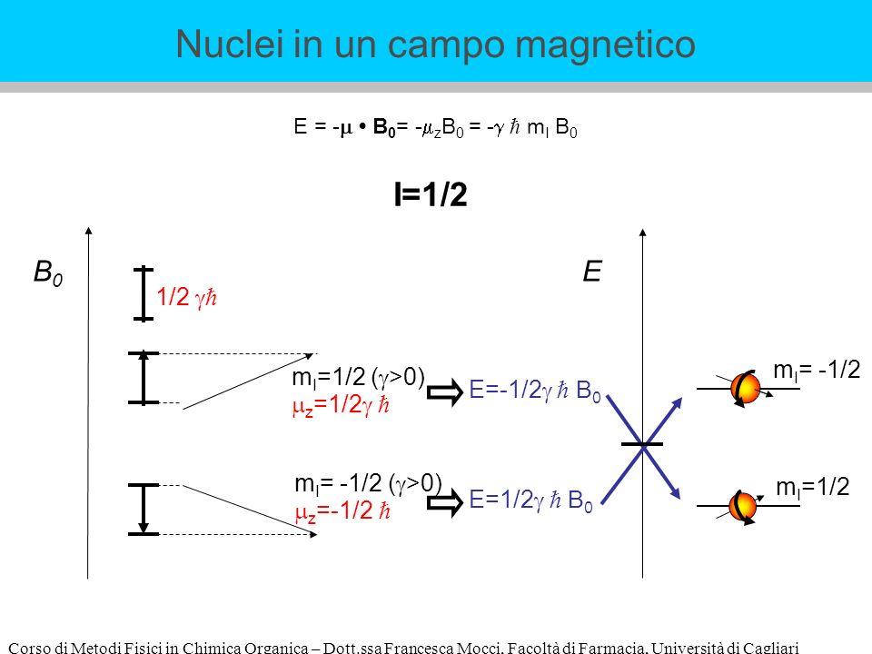 Corso di Metodi Fisici in Chimica Organica – Dott.ssa Francesca Mocci, Facoltà di Farmacia, Università di Cagliari E = - B 0 = - z B 0 = - m I B 0 B0B0 m I =1/2 ( >0) z =1/2 m I = -1/2 ( >0) z =-1/2 1/2 I=1/2 E=-1/2 B 0 E=1/2 B 0 E m I =1/2 m I = -1/2 Nuclei in un campo magnetico