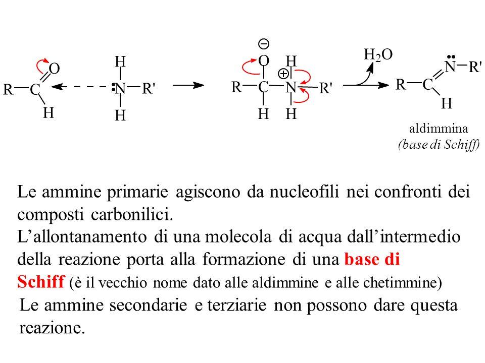 OH 2 N H H R' RC O H R' RC N H H O H RC N R' H aldimmina (base di Schiff) Le ammine primarie agiscono da nucleofili nei confronti dei composti carboni