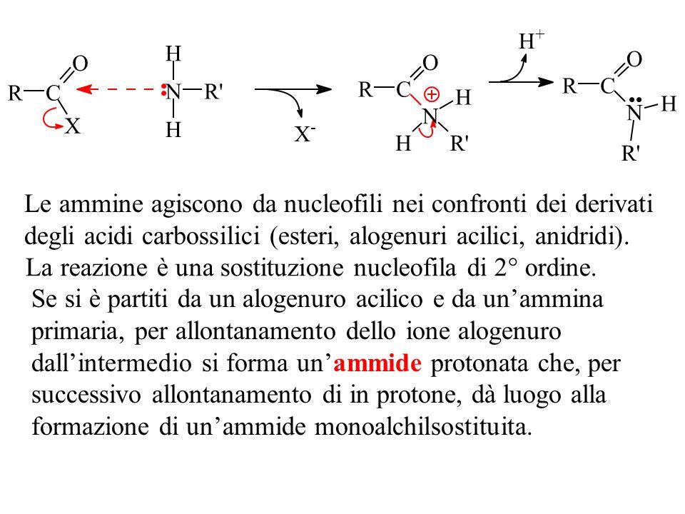 RC O X N H H R' X - RC O N H H R' RC O N H R' H + Le ammine agiscono da nucleofili nei confronti dei derivati degli acidi carbossilici (esteri, alogen