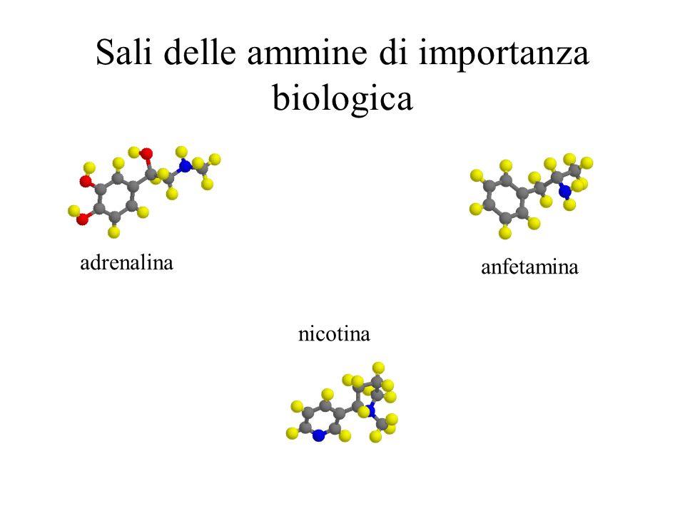 Sali delle ammine di importanza biologica nicotina anfetamina adrenalina