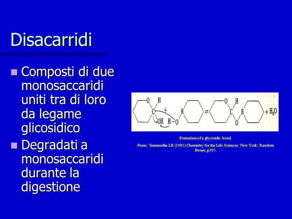Disacarridi Composti di due monosaccaridi uniti tra di loro da legame glicosidico Composti di due monosaccaridi uniti tra di loro da legame glicosidic