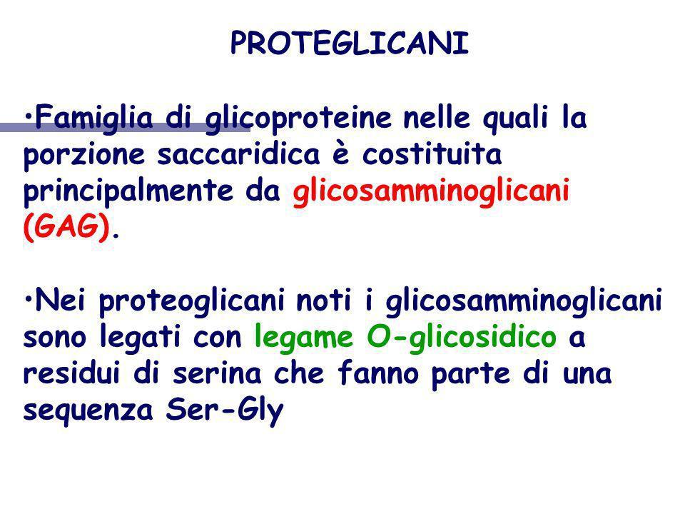 PROTEGLICANI Famiglia di glicoproteine nelle quali la porzione saccaridica è costituita principalmente da glicosamminoglicani (GAG). Nei proteoglicani