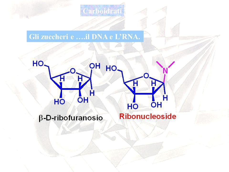 Carboidrati Gli zuccheri e ….il DNA e LRNA.