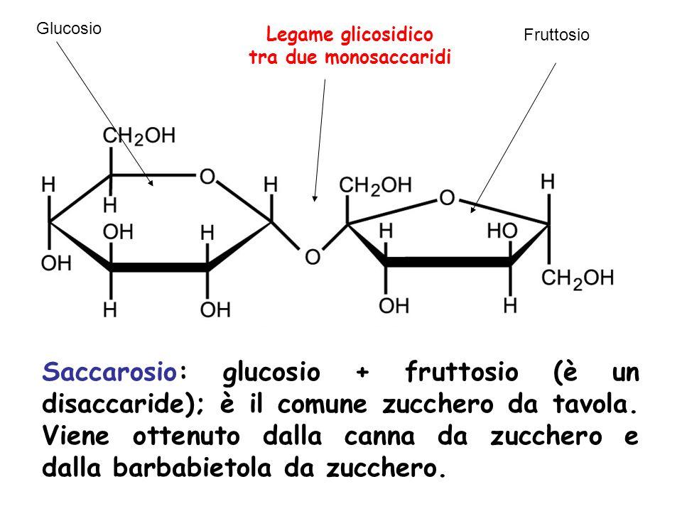 Saccarosio: glucosio + fruttosio (è un disaccaride); è il comune zucchero da tavola. Viene ottenuto dalla canna da zucchero e dalla barbabietola da zu