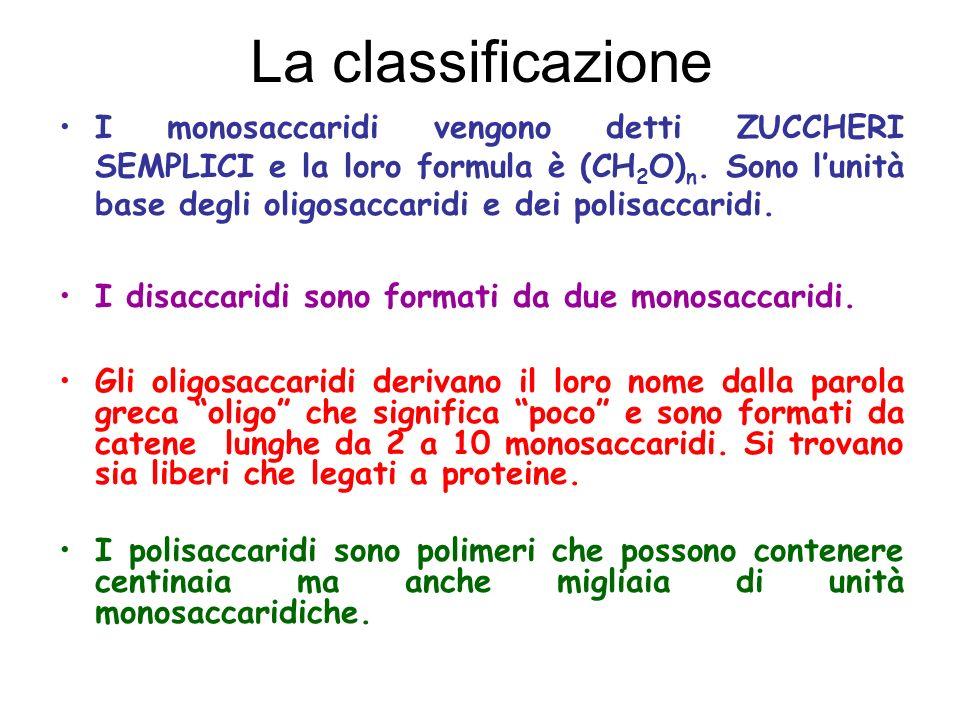 La classificazione I monosaccaridi vengono detti ZUCCHERI SEMPLICI e la loro formula è (CH 2 O) n. Sono lunità base degli oligosaccaridi e dei polisac