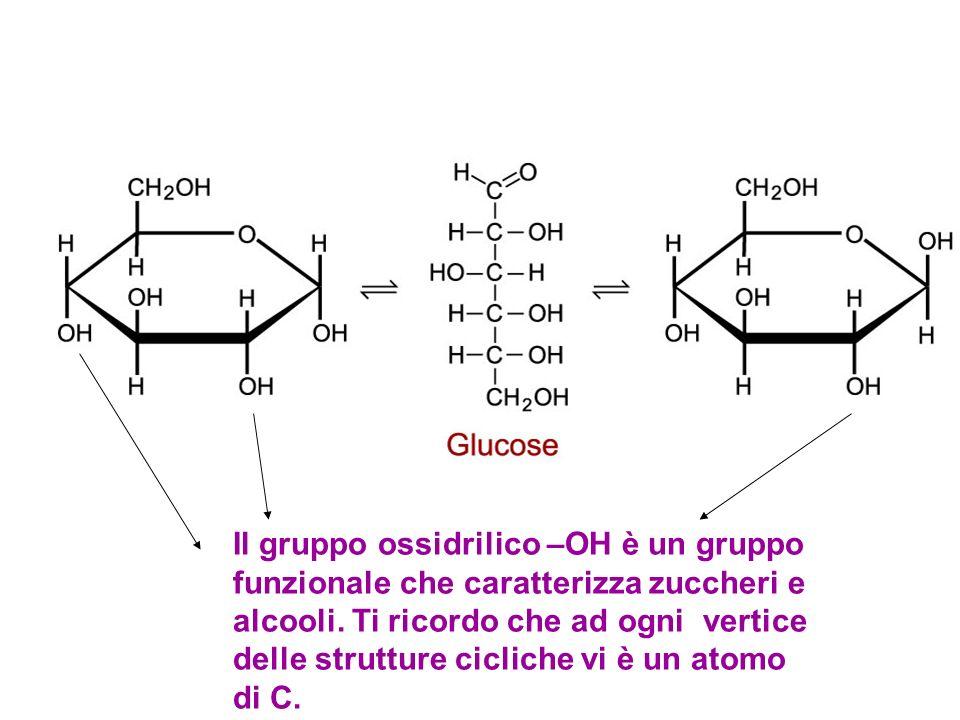 1.I monosaccaridi sono molecole di piccole dimensioni, generalmente costituiti da 3 a 7 atomi di carbonio. 2.Sono prodotti dagli organismi autotrofi t