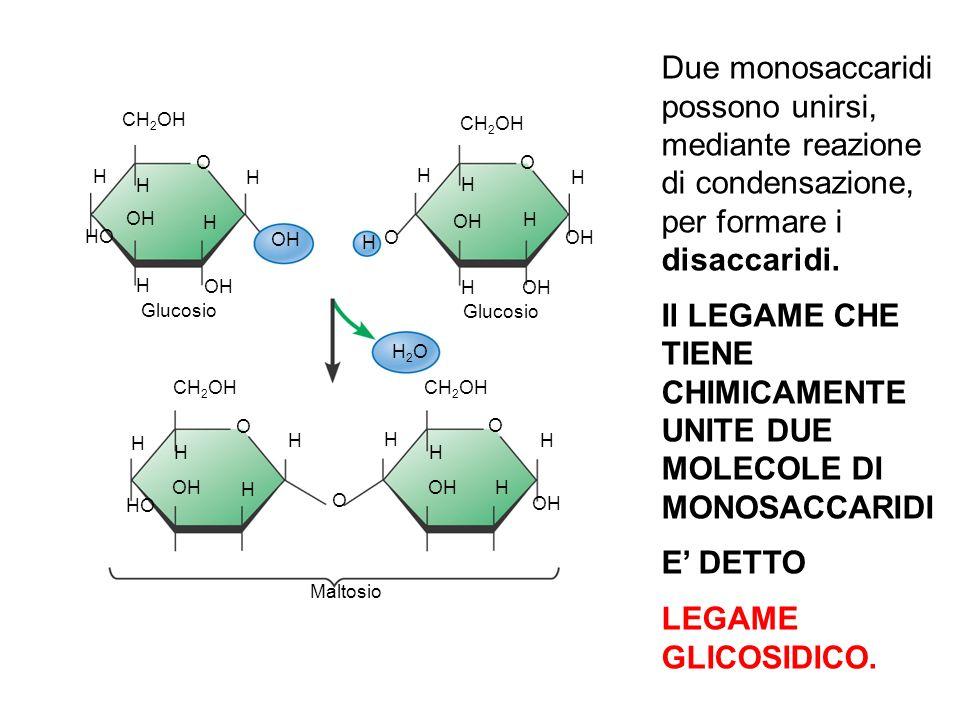 H H H H H H H H H H H H H H H H H H OH HO O O O OH CH 2 OH H2OH2O OH HO O OH O H Glucosio Maltosio O OH Due monosaccaridi possono unirsi, mediante rea
