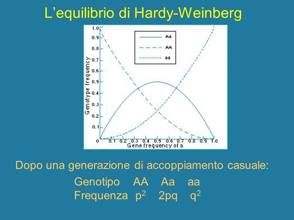 Lequilibrio di Hardy-Weinberg Dopo una generazione di accoppiamento casuale: Genotipo AA Aa aa Frequenza p 2 2pq q 2