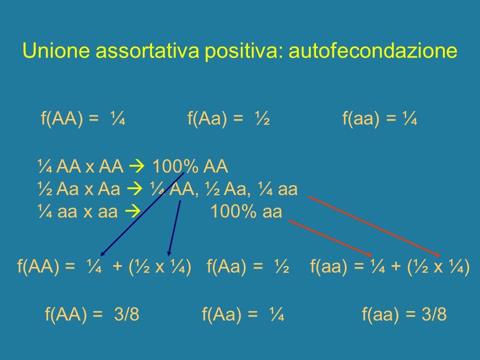 f(AA) = ¼ f(Aa) = ½ f(aa) = ¼ Unione assortativa positiva: autofecondazione ¼ AA x AA 100% AA ½ Aa x Aa ¼ AA, ½ Aa, ¼ aa ¼ aa x aa 100% aa f(AA) = 3/8