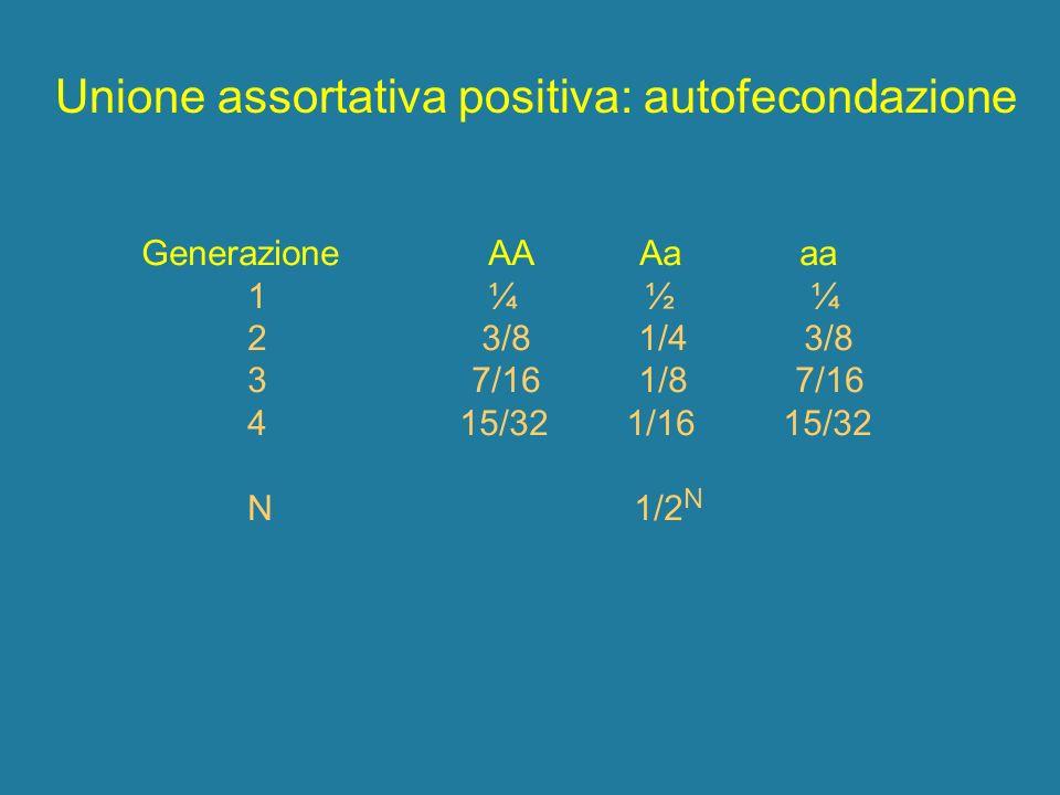 Unione assortativa positiva: autofecondazione Generazione AA Aa aa 1 ¼ ½ ¼ 2 3/8 1/4 3/8 3 7/16 1/8 7/16 415/32 1/16 15/32 N 1/2 N