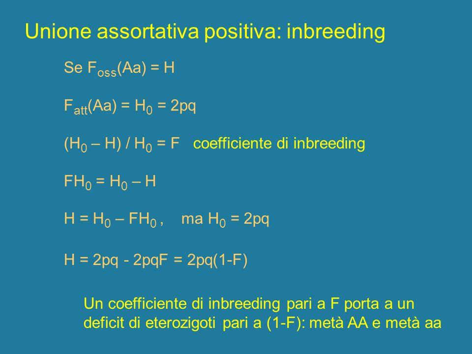 Unione assortativa positiva: inbreeding Se F oss (Aa) = H F att (Aa) = H 0 = 2pq (H 0 – H) / H 0 = F coefficiente di inbreeding FH 0 = H 0 – H H = H 0