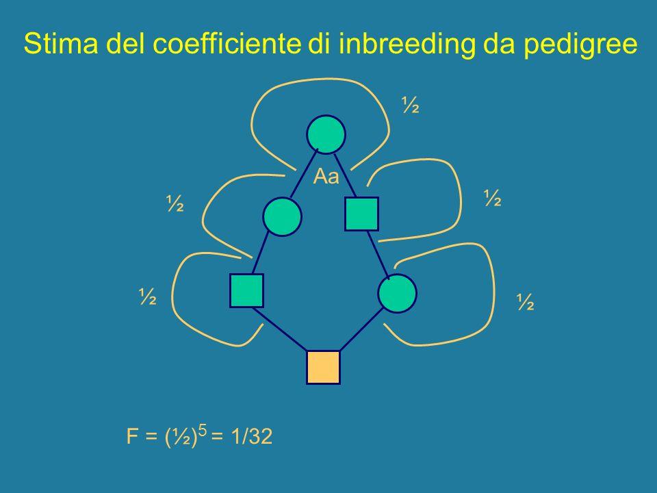 ½ ½ ½ ½ ½ Aa F = (½) 5 = 1/32