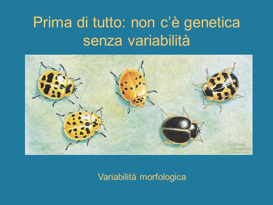 Variabilità genetica: proteine