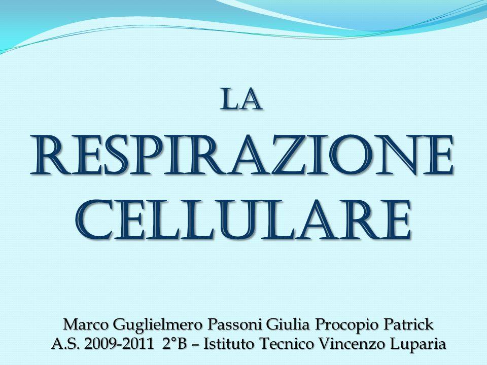 LA RESPIRAZIONE CELLULARE Marco Guglielmero Passoni Giulia Procopio Patrick A.S. 2009-2011 2°B – Istituto Tecnico Vincenzo Luparia