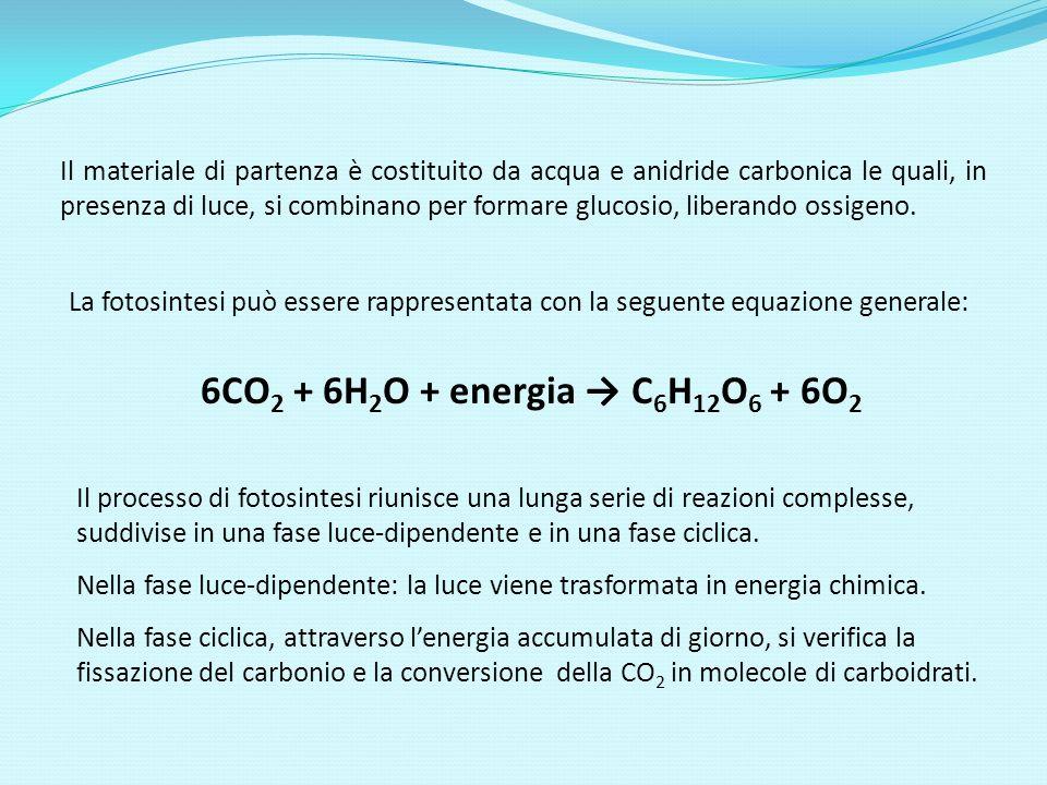 La fotosintesi può essere rappresentata con la seguente equazione generale: 6CO 2 + 6H 2 O + energia C 6 H 12 O 6 + 6O 2 Il processo di fotosintesi ri
