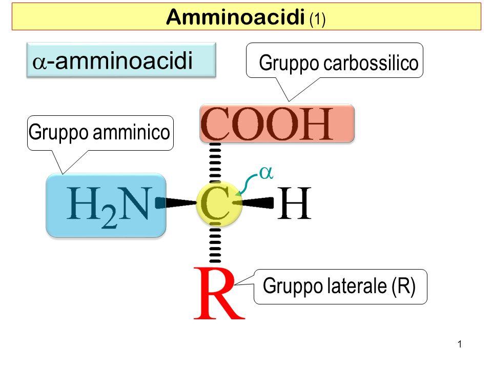 Amminoacidi (1) Gruppo carbossilico Gruppo amminico Gruppo laterale (R) -amminoacidi 1