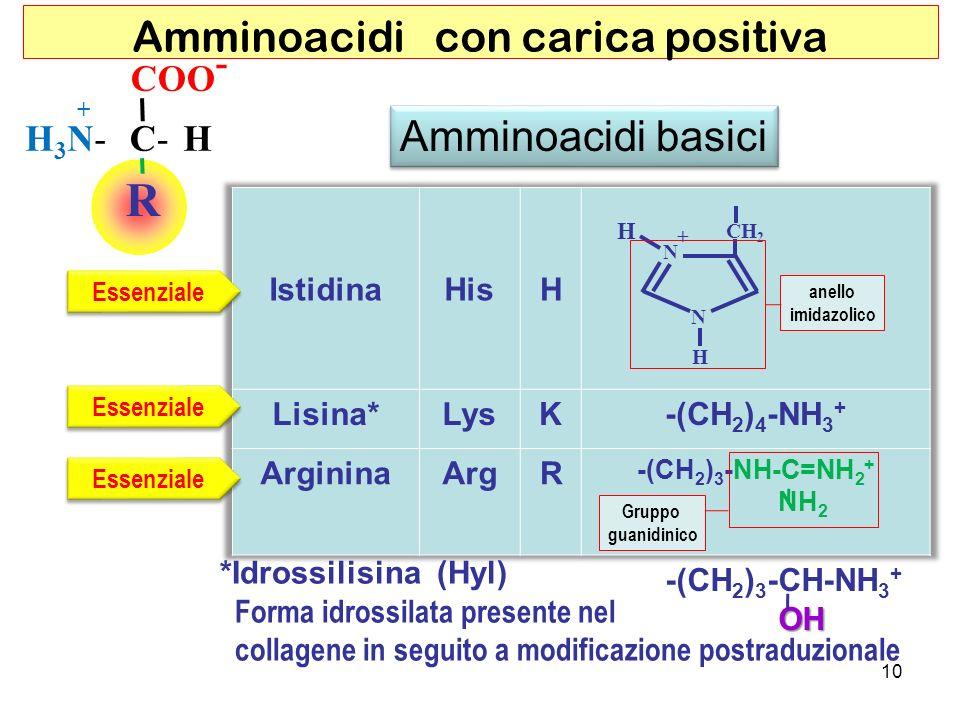 Amminoacidi con carica positiva R COO - C-HH3N-H3N- + Amminoacidi basici H N N CH 2 H + Essenziale -(CH 2 ) 3 -CH-NH 3 + OH *Idrossilisina (Hyl) Forma