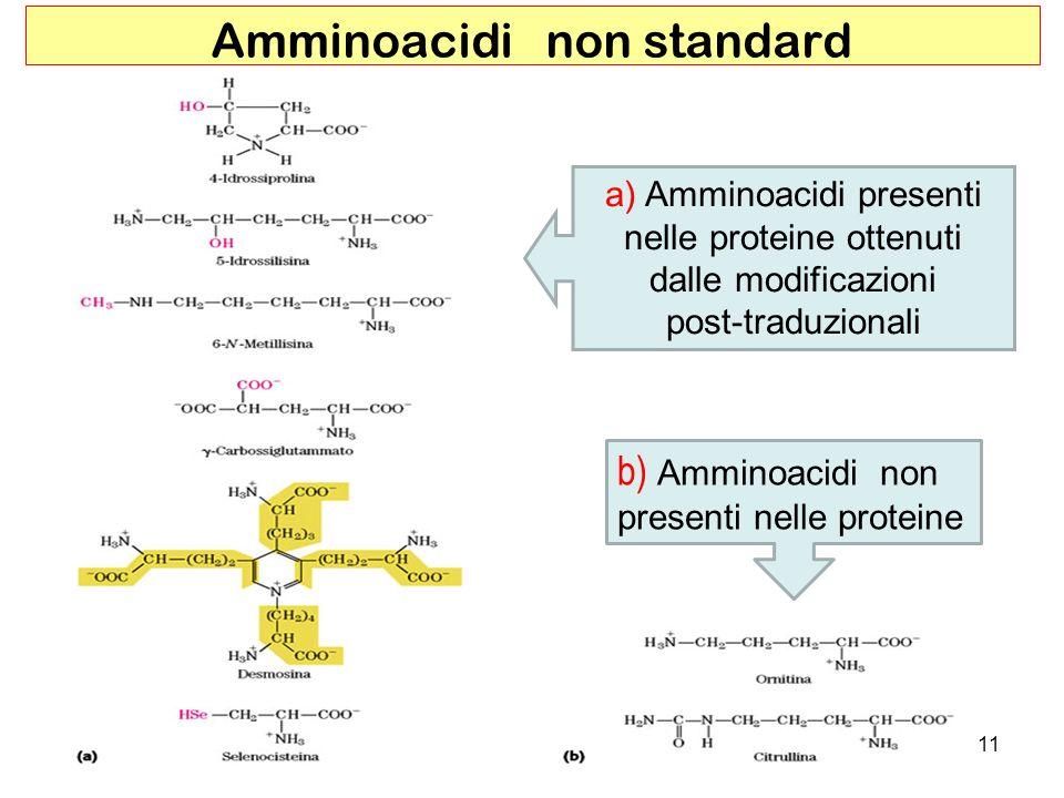 Amminoacidi non standard a) Amminoacidi presenti nelle proteine ottenuti dalle modificazioni post-traduzionali b) Amminoacidi non presenti nelle prote