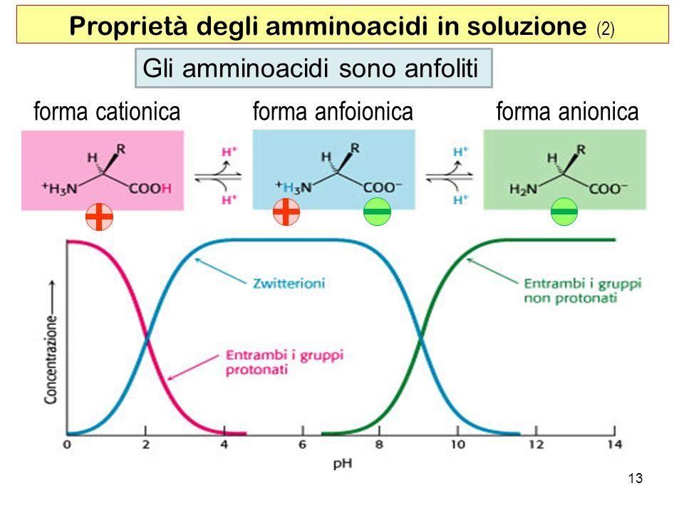 13 Gli amminoacidi sono anfoliti forma anionicaforma anfoionicaforma cationica Proprietà degli amminoacidi in soluzione (2)
