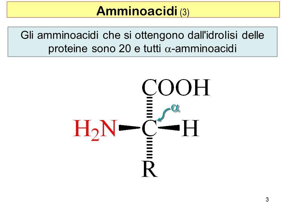 3 Gli amminoacidi che si ottengono dall'idrolisi delle proteine sono 20 e tutti -amminoacidi Amminoacidi (3)