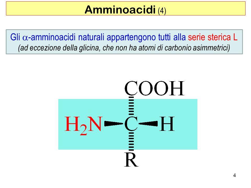 4 Gli -amminoacidi naturali appartengono tutti alla serie sterica L (ad eccezione della glicina, che non ha atomi di carbonio asimmetrici) Amminoacidi