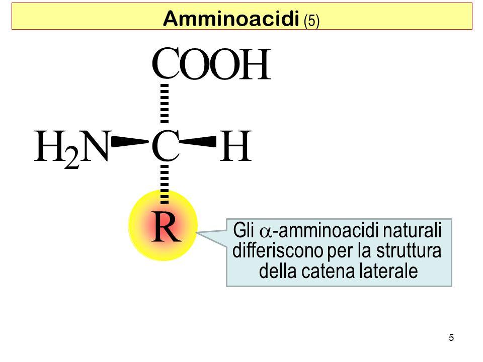 5 CHH 2 N C OOH R Amminoacidi (5) Gli -amminoacidi naturali differiscono per la struttura della catena laterale