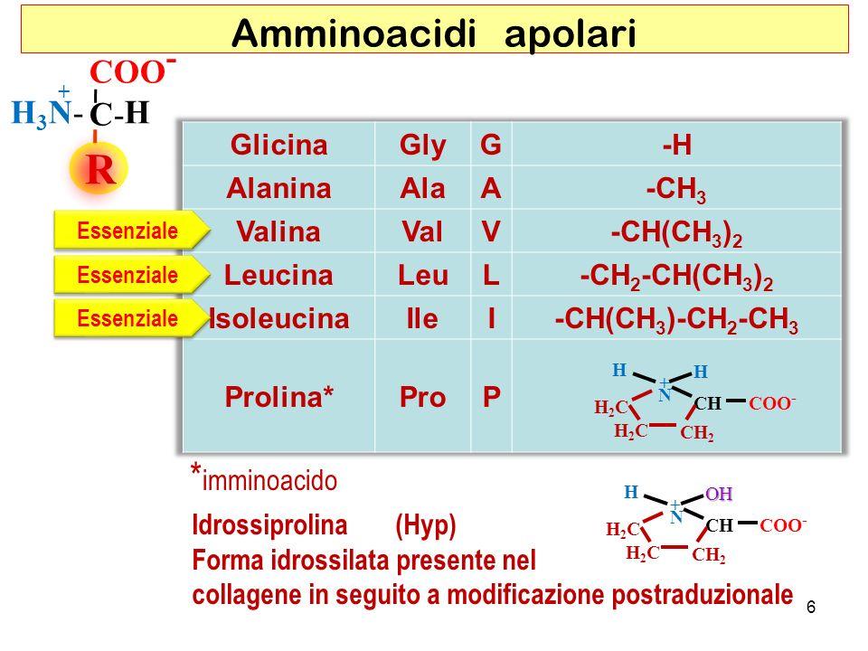R COO - C- HH3N-H3N- + Amminoacidi apolari * imminoacido H H N CHCOO - CH 2 H2CH2C H2CH2C + Essenziale HOH N CHCOO - CH 2 H2CH2C H2CH2C + Idrossiproli