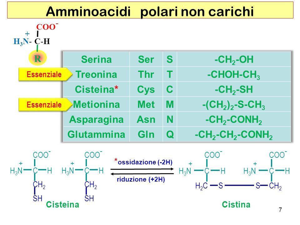 R COO - C-HH3N-H3N- + Amminoacidi polari non carichi Essenziale SH CH 2 COO - CHH3NH3N + SH CH 2 COO - CHH3NH3N + S CHH3NH3N + SH2CH2C CHH3NH3N + CH 2