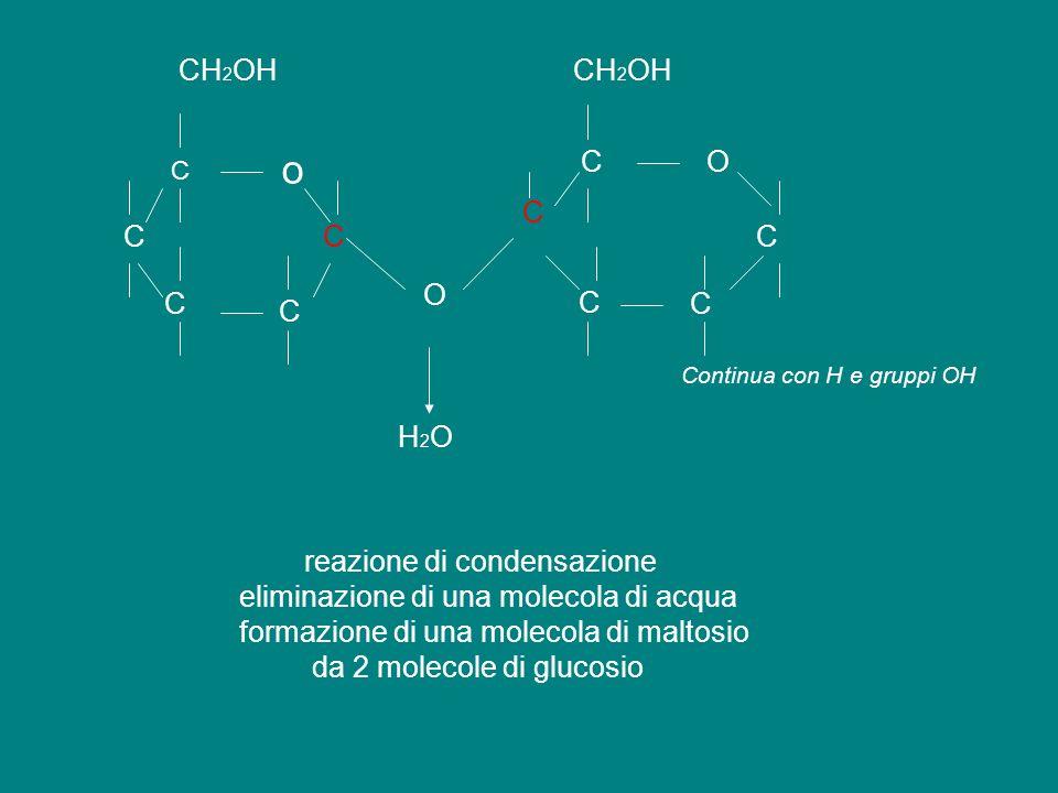 C o C C C C CH 2 OH O C C C C OC reazione di condensazione eliminazione di una molecola di acqua formazione di una molecola di maltosio da 2 molecole