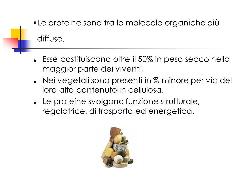 Le proteine sono tra le molecole organiche più diffuse. Esse costituiscono oltre il 50% in peso secco nella maggior parte dei viventi. Nei vegetali so