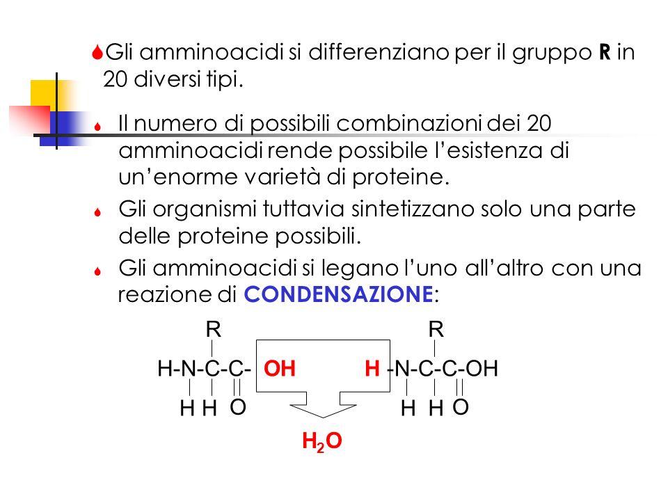 Gli amminoacidi si differenziano per il gruppo R in 20 diversi tipi. Il numero di possibili combinazioni dei 20 amminoacidi rende possibile lesistenza