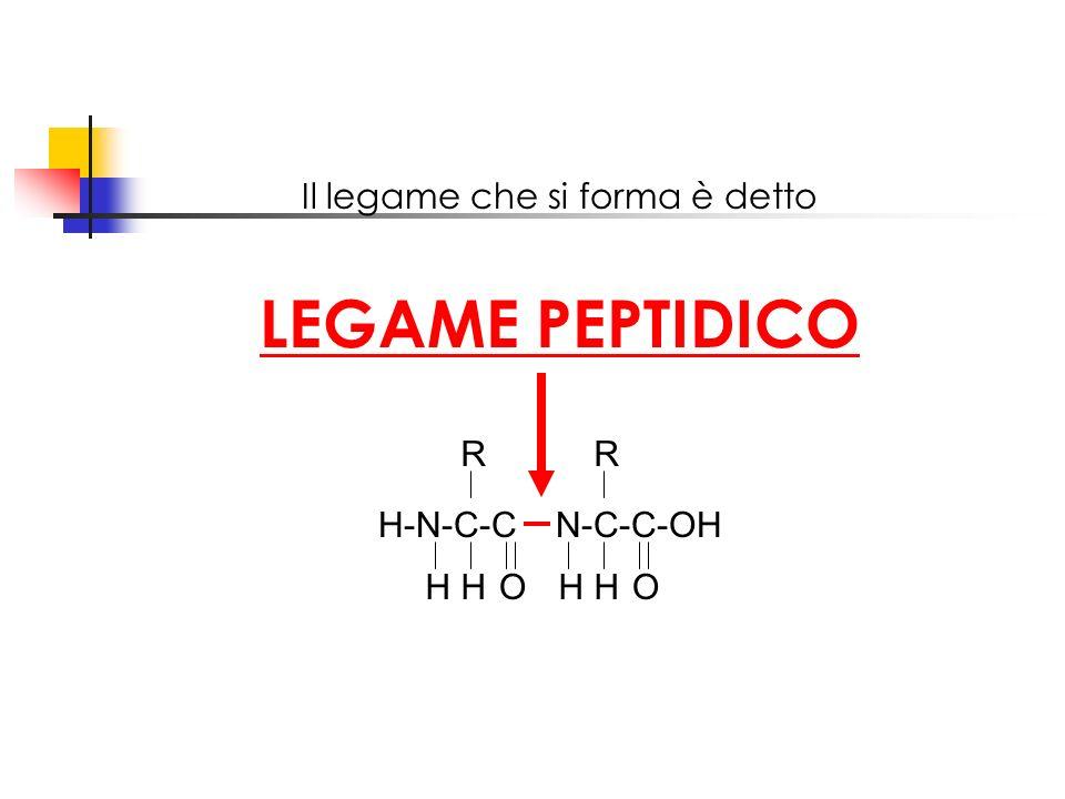 Il legame che si forma è detto LEGAME PEPTIDICO H-N-C-C N-C-C-OH HHHHOO RR