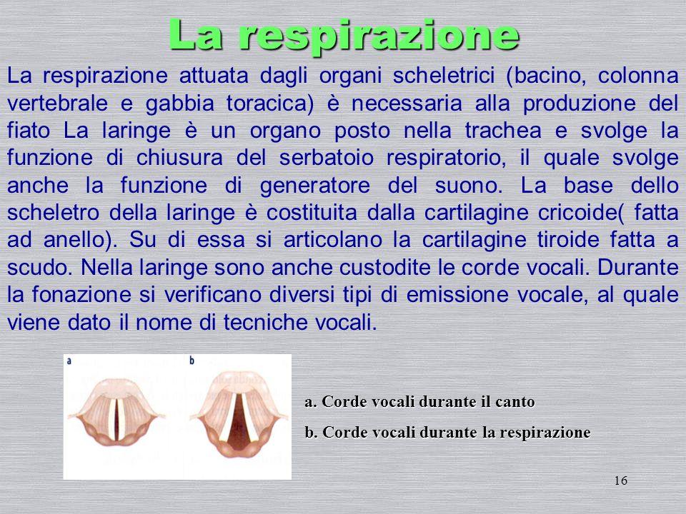 16 La respirazione attuata dagli organi scheletrici (bacino, colonna vertebrale e gabbia toracica) è necessaria alla produzione del fiato La laringe è