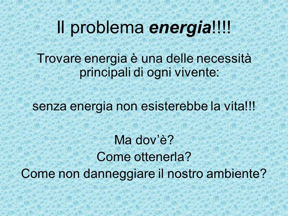 Il problema energia!!!! Trovare energia è una delle necessità principali di ogni vivente: senza energia non esisterebbe la vita!!! Ma dovè? Come otten