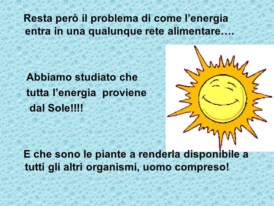 Resta però il problema di come lenergia entra in una qualunque rete alimentare…. Abbiamo studiato che tutta lenergia proviene dal Sole!!!! E che sono