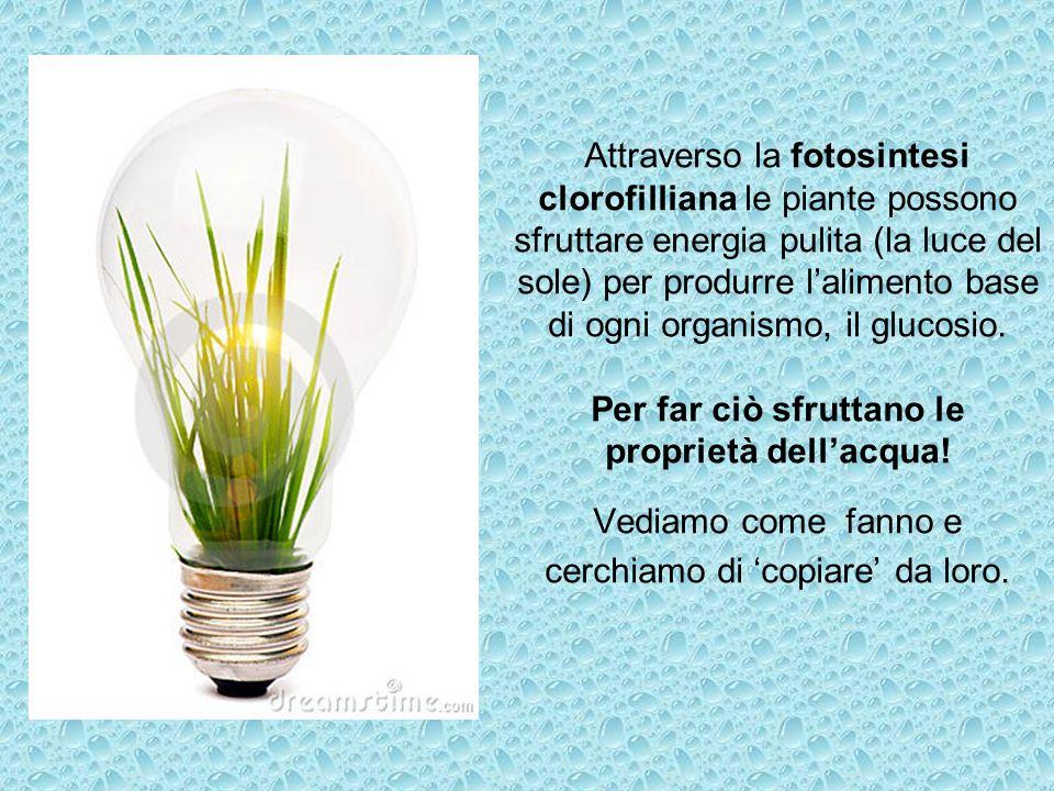 Attraverso la fotosintesi clorofilliana le piante possono sfruttare energia pulita (la luce del sole) per produrre lalimento base di ogni organismo, i