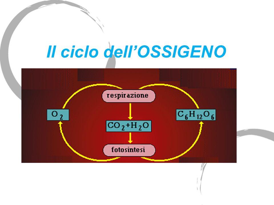 Il ciclo dellOSSIGENO