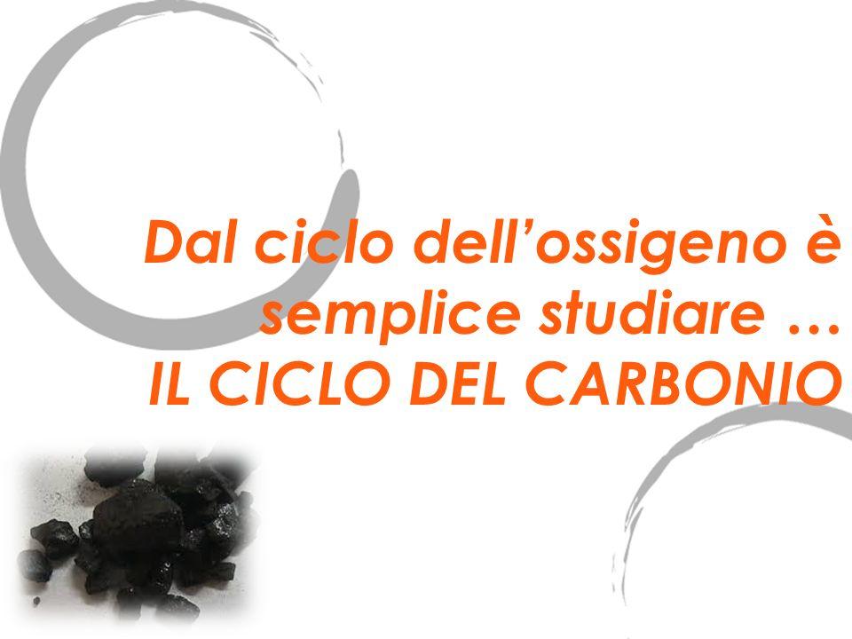 Dal ciclo dellossigeno è semplice studiare … IL CICLO DEL CARBONIO