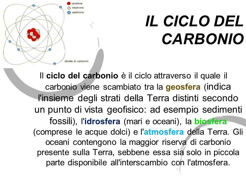 Il ciclo del carbonio è il ciclo attraverso il quale il carbonio viene scambiato tra la geosfera ( indica l'insieme degli strati della Terra distinti