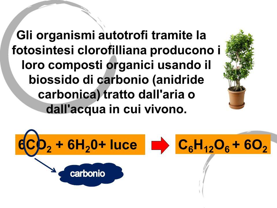 Gli organismi autotrofi tramite la fotosintesi clorofilliana producono i loro composti organici usando il biossido di carbonio (anidride carbonica) tr